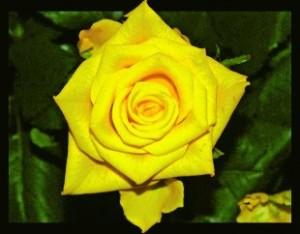 najpiękniejsze kwiaty ogrodowe (źródło:nomi.pl)